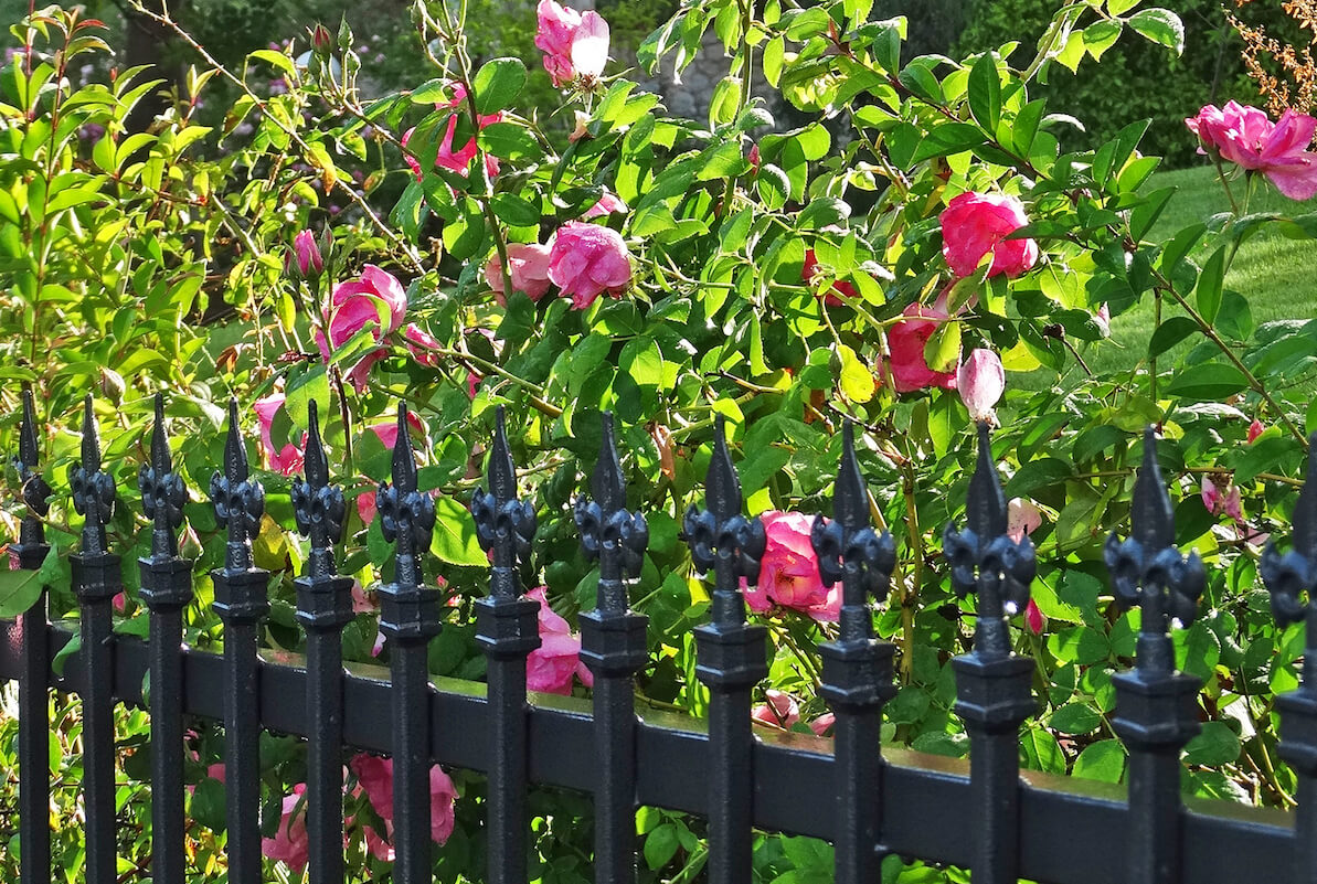 Wrought Iron Fences • Insteading