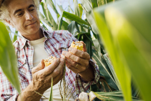 Food producers across the United States are planning to ditch biotech seeds, as yearly hikes in GM seed prices put them out of reach for many farmers.