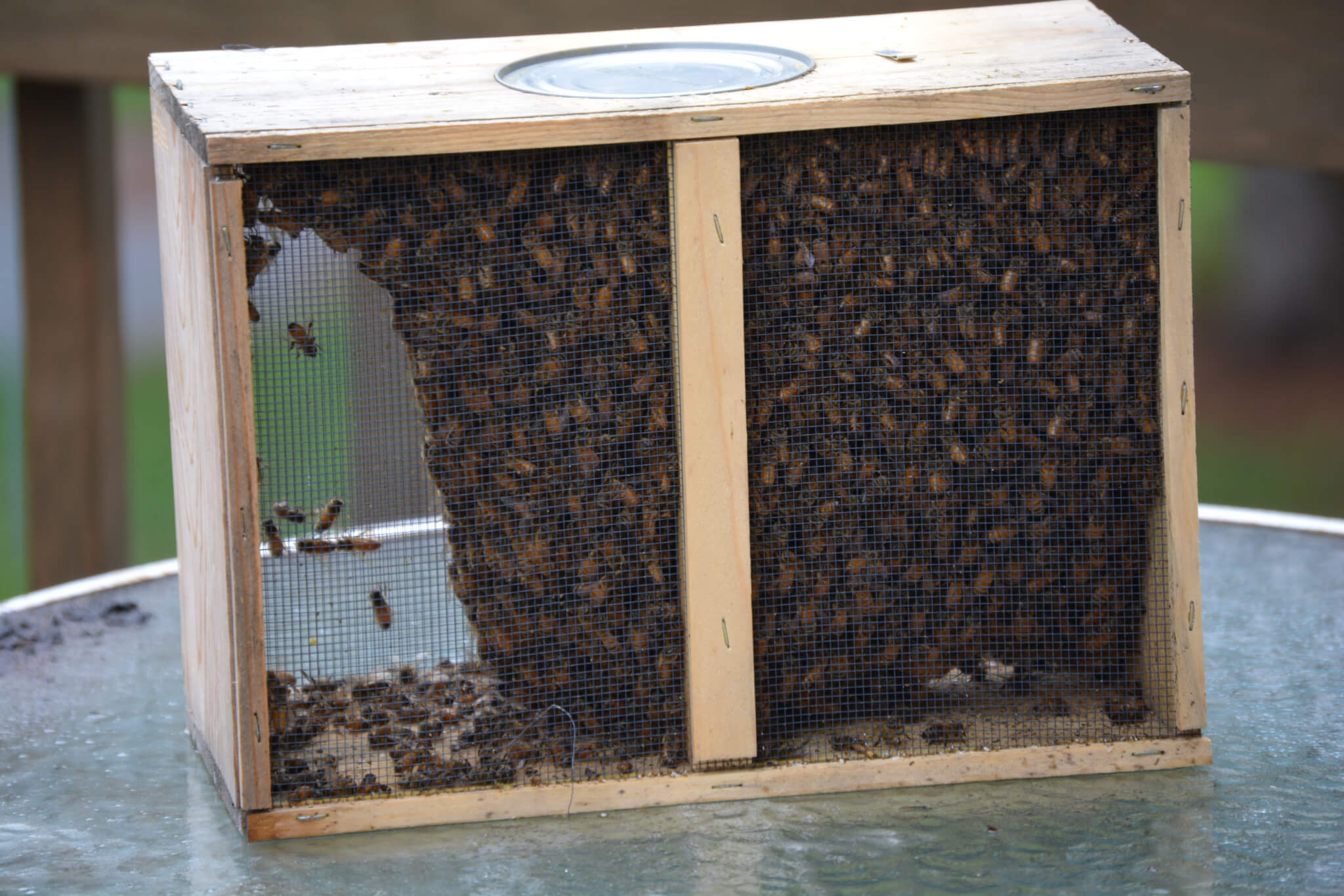 The Bees Arrive