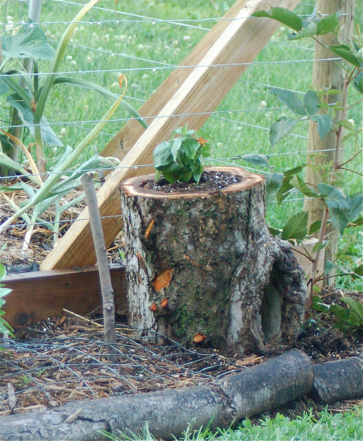 Hollow Tree Planter Project