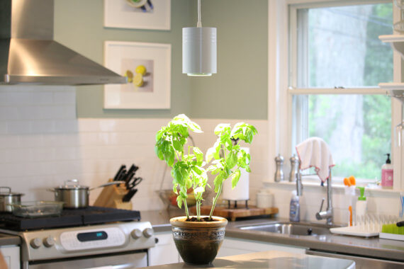 plant with grow light on kitchen counter