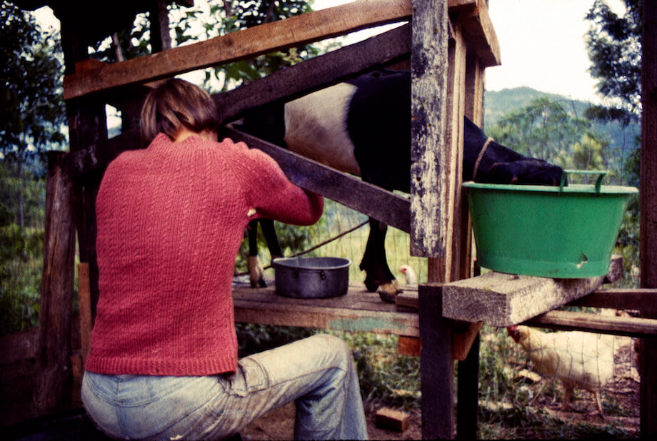 a woman milking a goat, which is on a goat stanchion