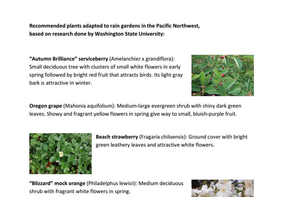 NW Rain Garden Plants