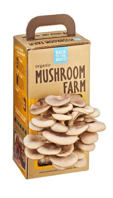 Organic Mushroom Farm