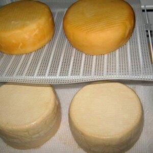 goat cheese made without rennet