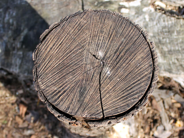 the top of a log before being split for wood
