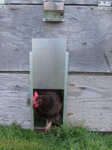 Automatic Chicken Coop Door ...