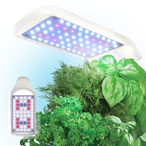 Led Kitchen Garden Year Around Counter Top Culinary Herb: Miracle-Gro AeroGarden Sprout Indoor Hydroponic Garden Kit