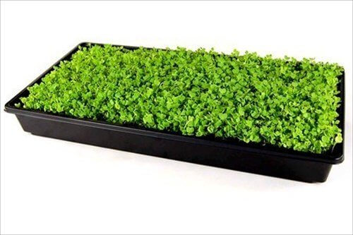 Micro Greens At Whole Foods