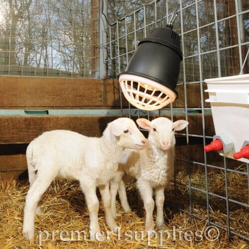 Premier Quot Prima Quot Heat Lamp For Poultry Lambs And Pets Insteading