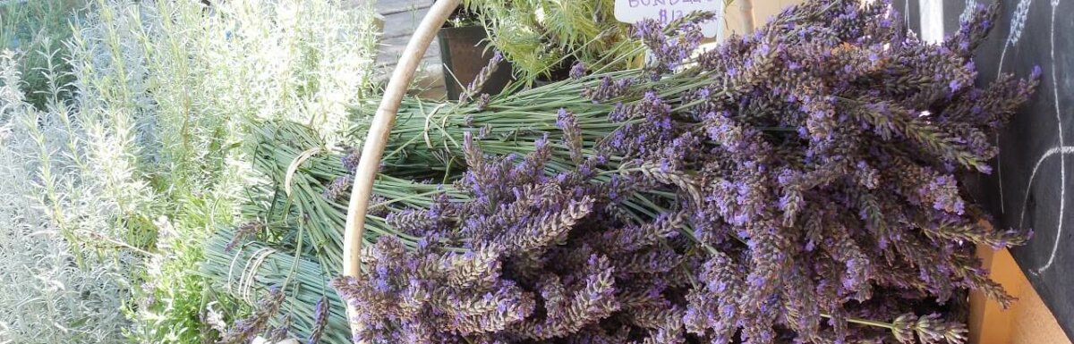 lavender bushels