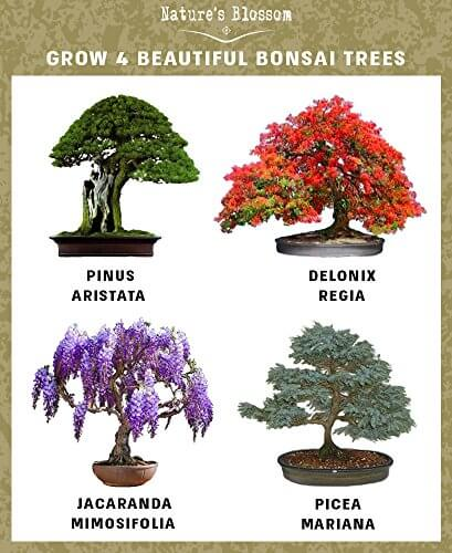 Nature\'s Blossom Bonsai Tree Germination Kit • Insteading