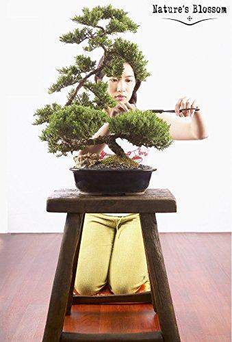 Nature S Blossom Bonsai Tree Germination Kit Insteading