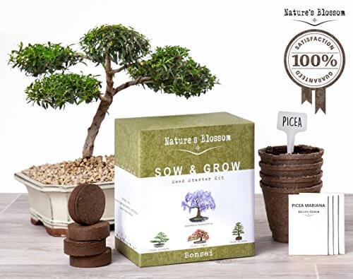 Nature's Blossom Bonsai Tree Germination Kit