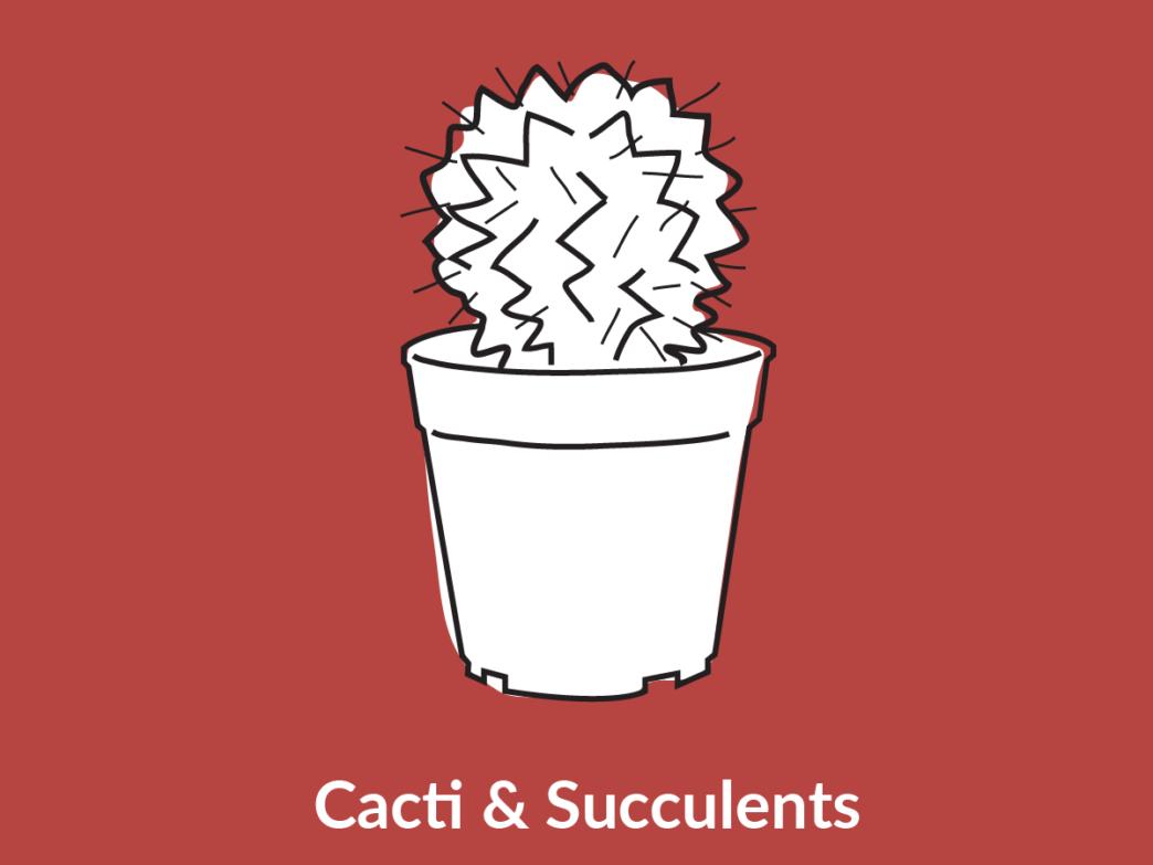 a cactus plant
