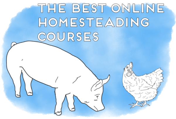 online homesteading courses header