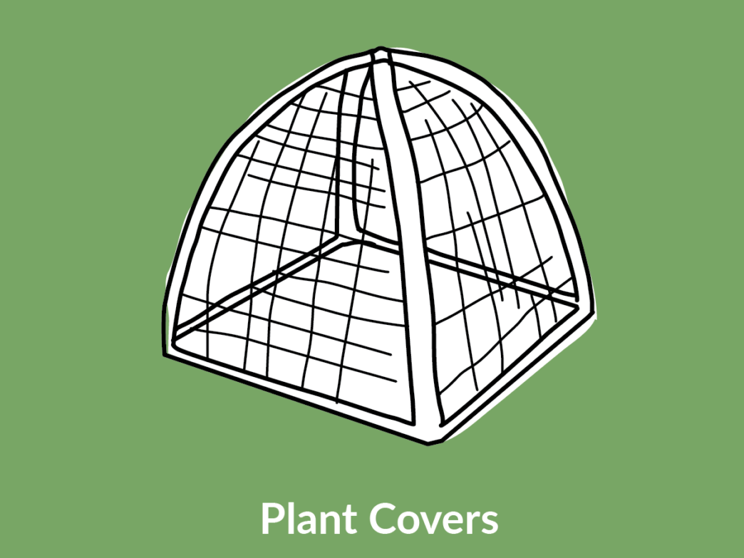 plant cover