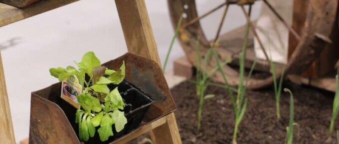 ladder as planter