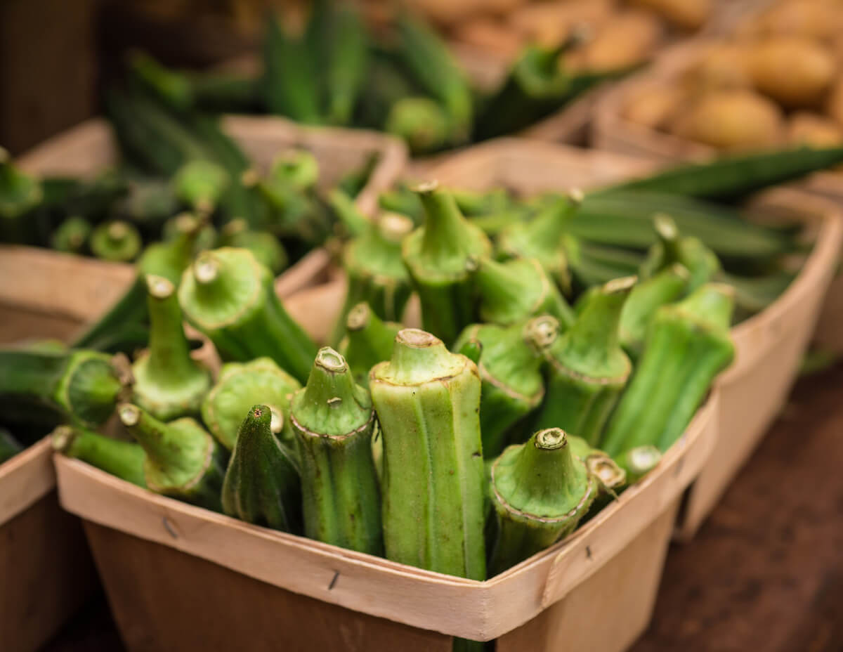 okra harvested