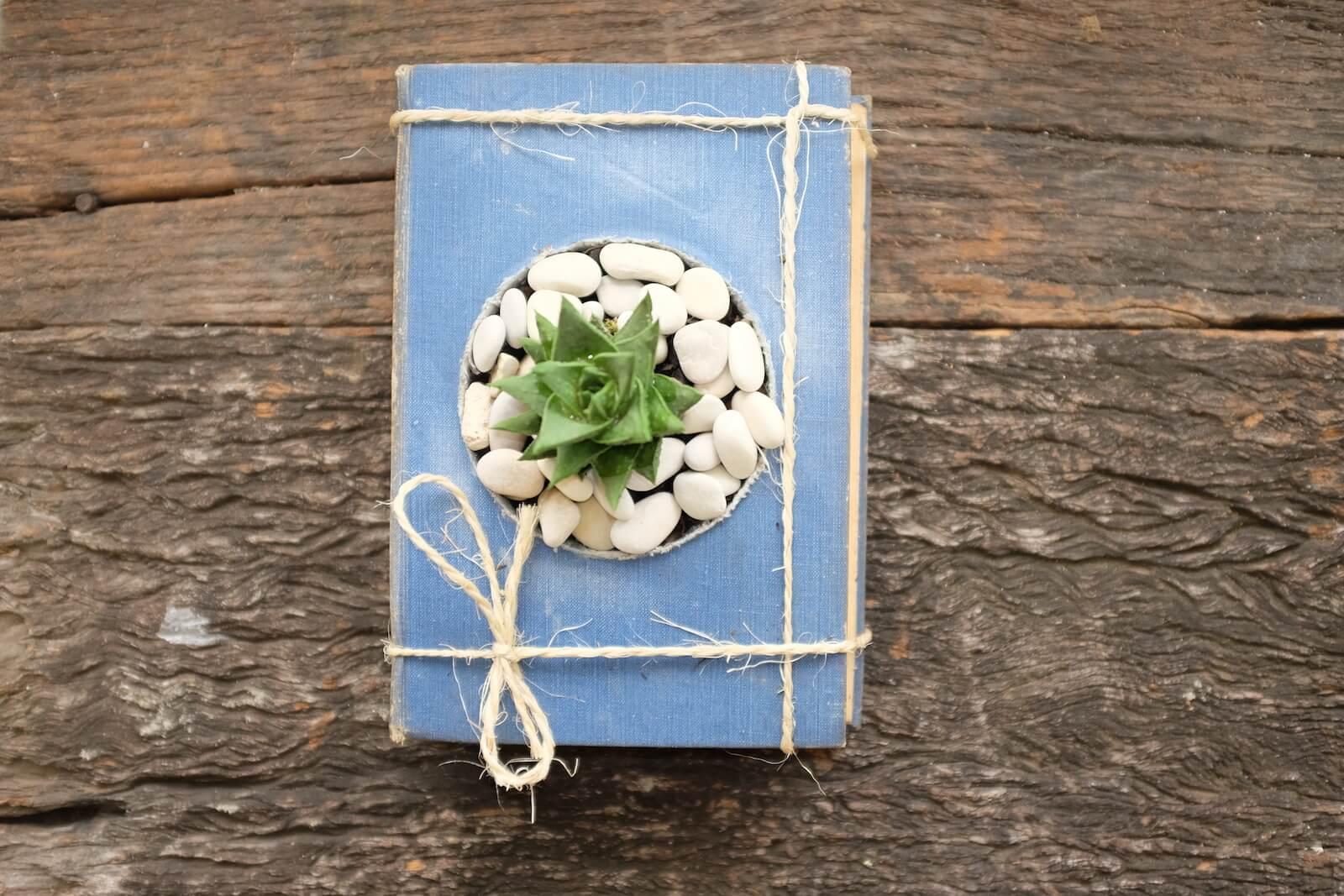 a complete vintage book succulent planter