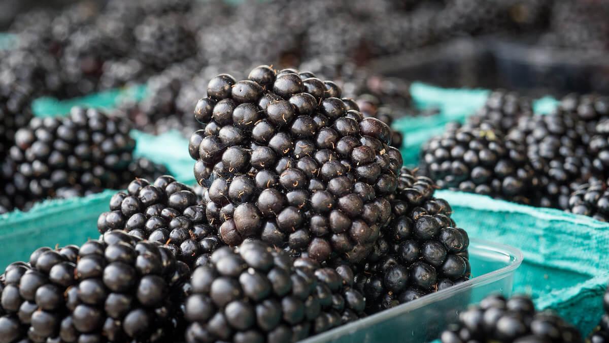 blackberries for sale