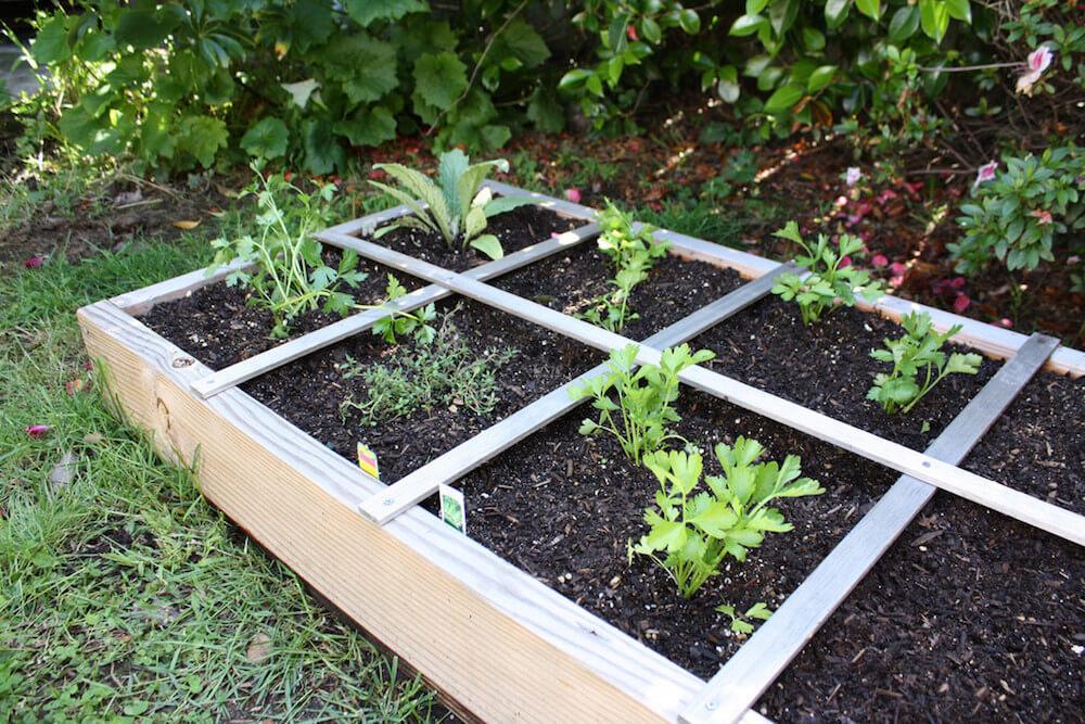 celery grows next to thyme
