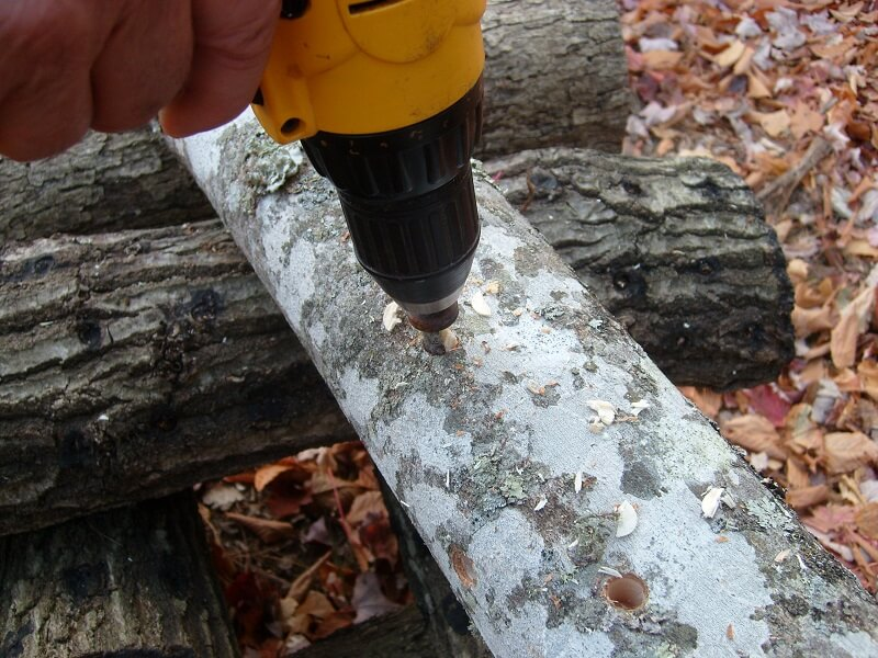 drilling holes in logs
