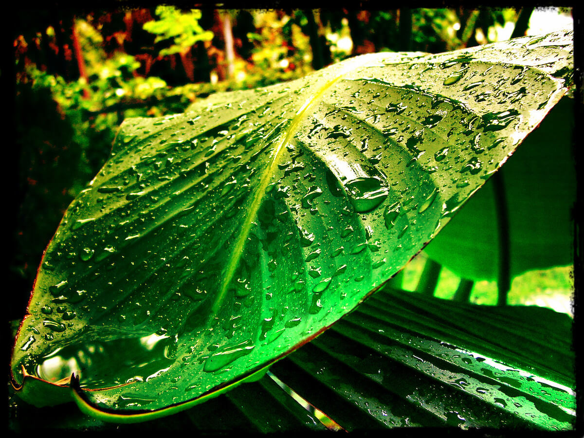 plants that like wet soil