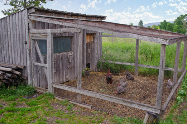 A wooden chicken coop with an attached chicken run is in the middle of a field.