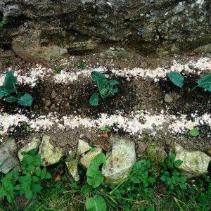 egg shells garden