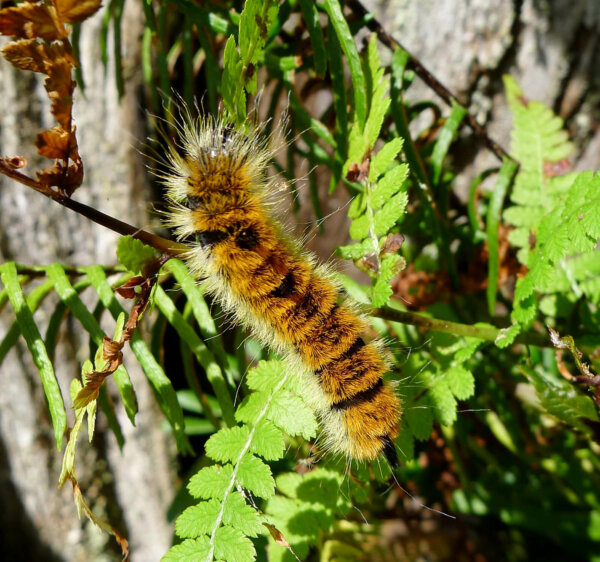 caterpillar climbing on a leafy branch