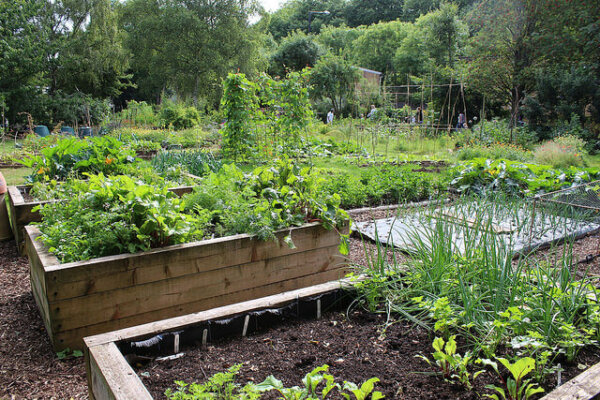 how to get rid of whiteflies in vegetable garden