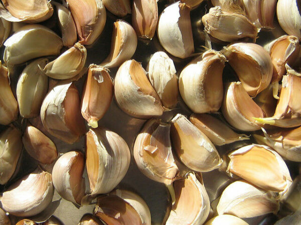 cloves of garlic unpeeled