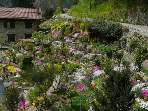 rock garden with alpine plants in full bloom