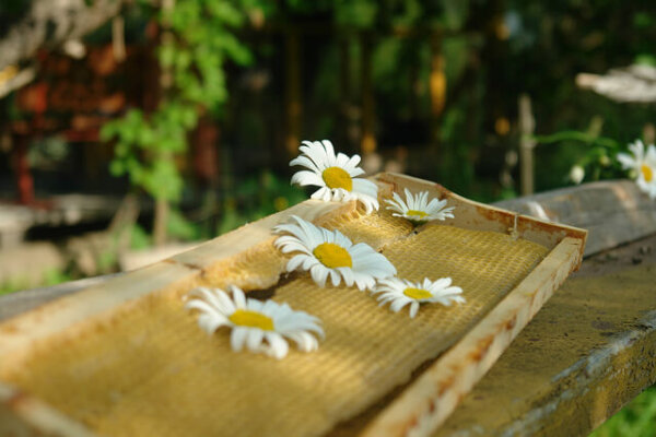 fresh beeswax with daisies sitting on top