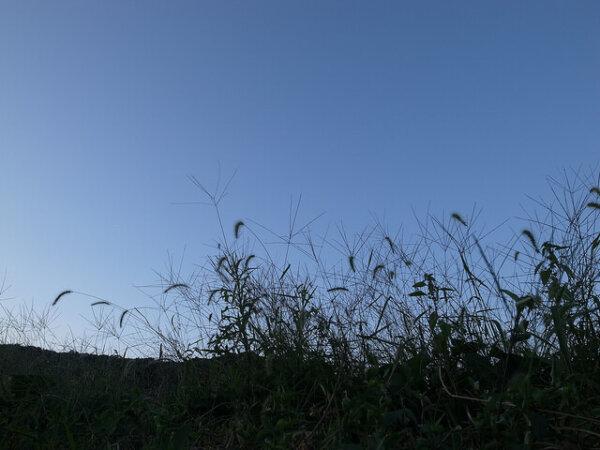 yard weeds growing