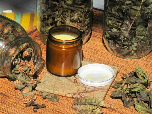 homemade healing salve surrounded by jars of picked backyard weeds