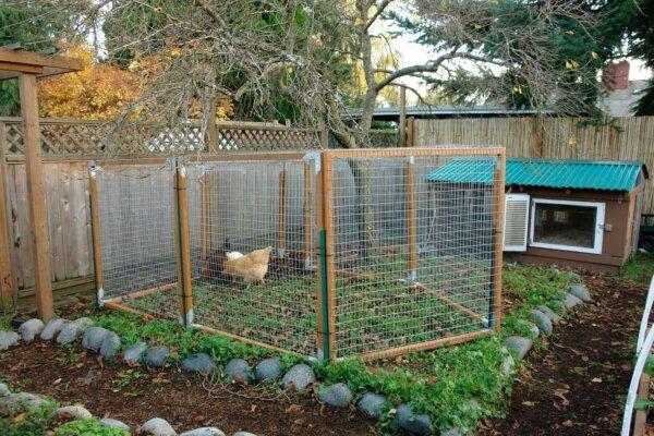 chicken run in backyard