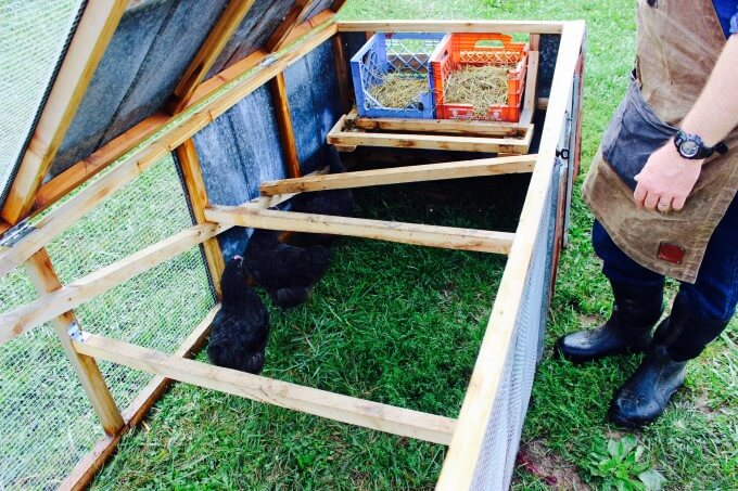 Affordable Chicken Tractor Plans