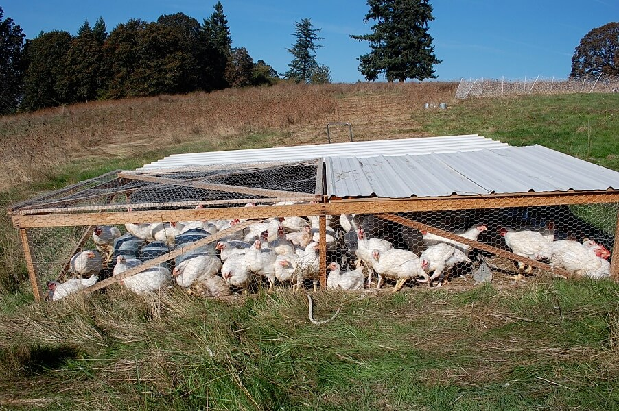 Joel Salatin Chicken Tractor Plans