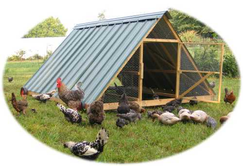 Large A Frame Chicken Tractor Plans