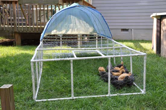 PVC Pipe Chicken Tractor Plans
