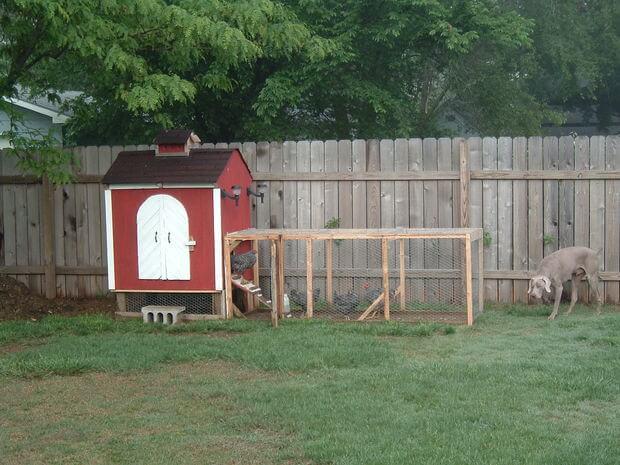 Small Backyard Chicken Coop Plans