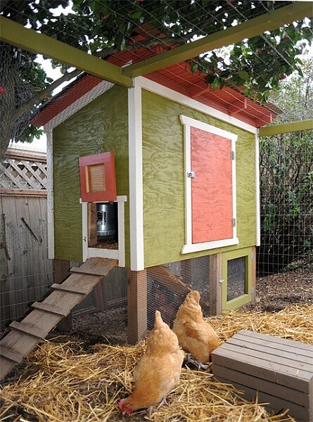 Urban Chicken Coop Plans