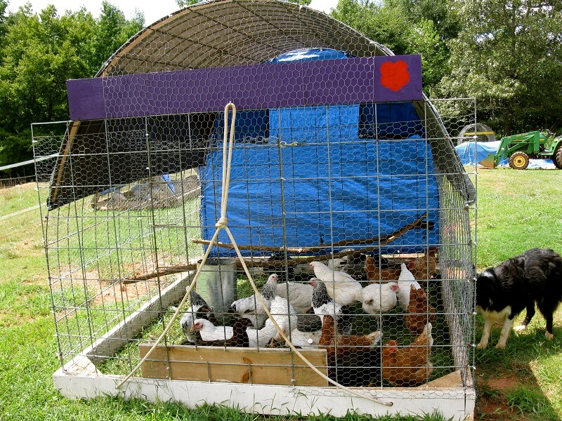 Wire Chicken Tractor Plans