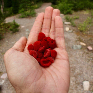 thimble berries in hand