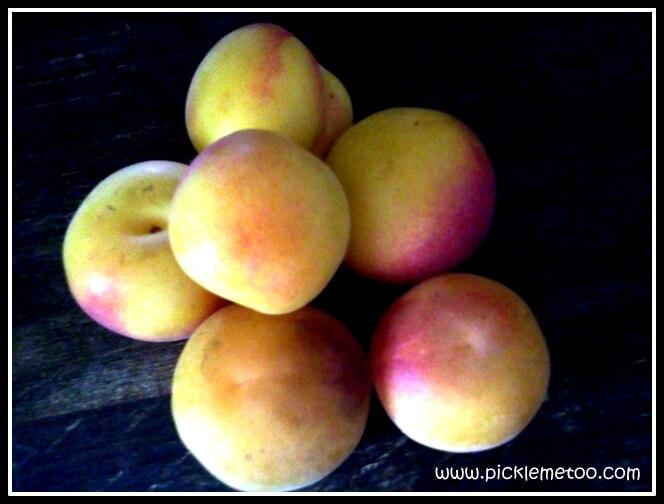 Basic Fermented Fruit Recipe