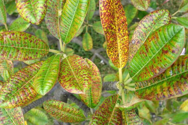 diseased plant leaves