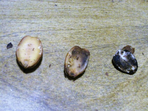 3 different acorns
