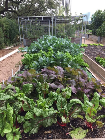 raised garden bed with beets and leafy greens